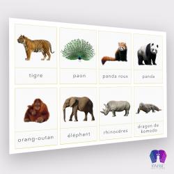 Cartes de nomenclatures des animaux d'Asie