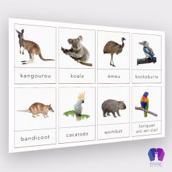 Cartes de nomenclature des animaux en Océanie