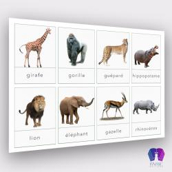 Cartes de nomenclature des animaux d'Afrique